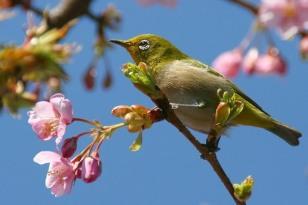 XUAN_bird